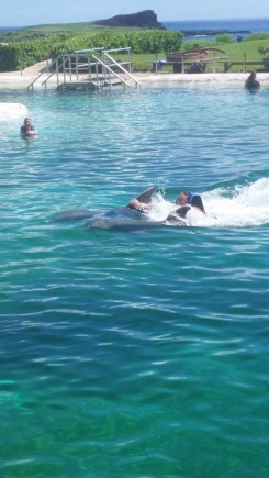 We weren't allowed to have cameras while we had our Dolphin Encounter