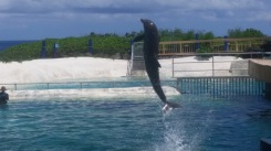That's the Wolphin - Half Whale, Half Dolphin